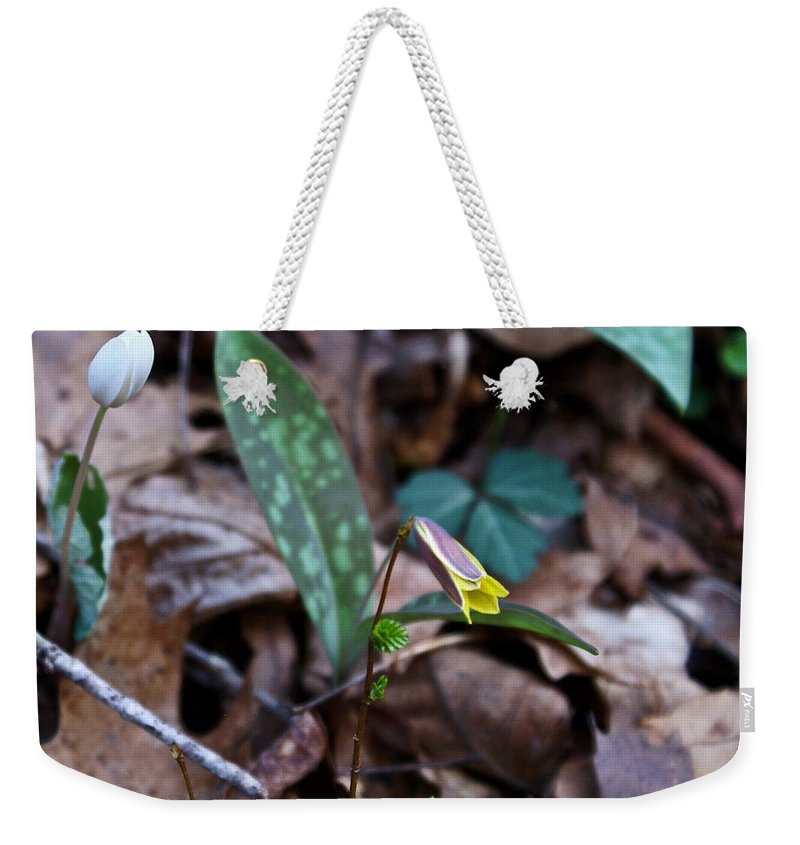 Yellow Weekender Tote Bag featuring the photograph Yellow Trout Lily 2 by Douglas Barnett