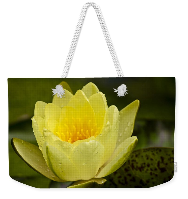 J Paul Getty Weekender Tote Bag featuring the photograph Yellow Water Lilly by Teresa Mucha