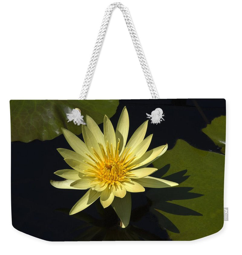 Yellow Water Lily Weekender Tote Bag featuring the photograph Yellow Water Lily by Sally Weigand