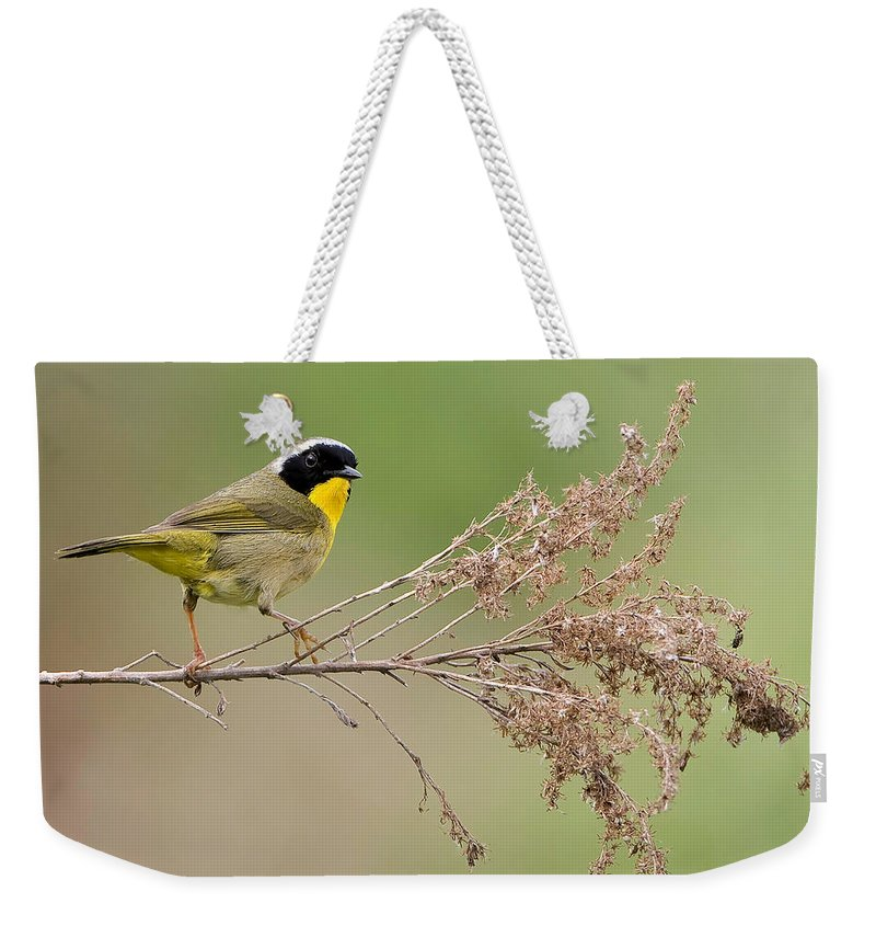 Warbler Weekender Tote Bag featuring the photograph Yellowthroat Warbler by William Jobes