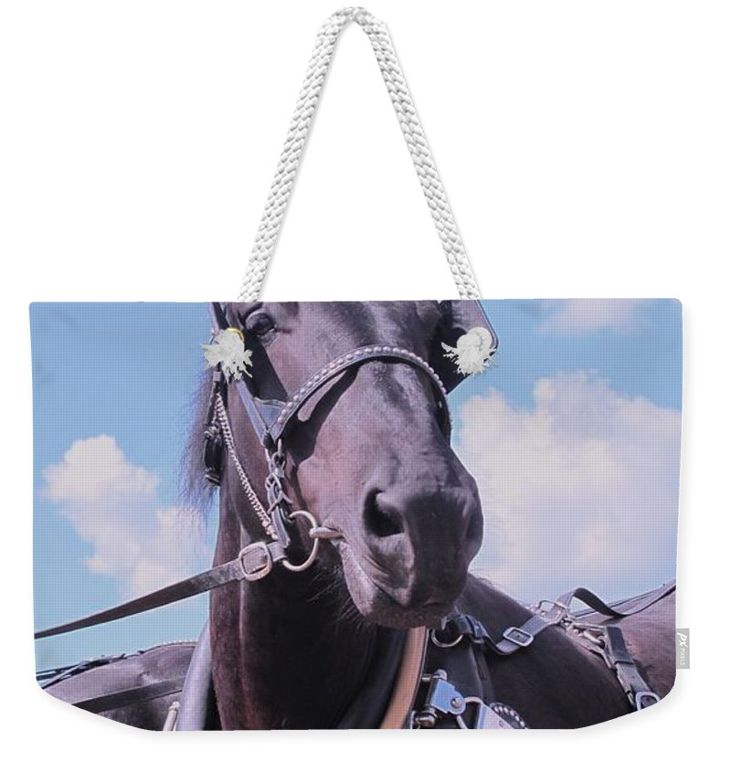 Percheron Weekender Tote Bag featuring the photograph Yes I Am The Most Beautiful by Ian MacDonald