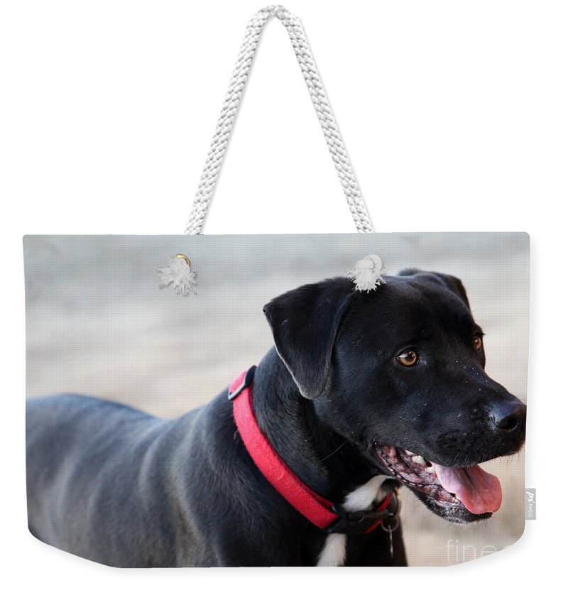 Dogs Weekender Tote Bag featuring the photograph Yes I Want To Play by Amanda Barcon