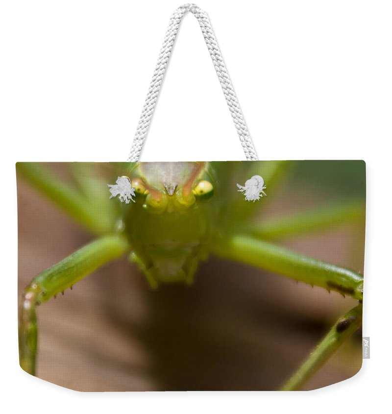 Katydid Weekender Tote Bag featuring the photograph You Said What by Douglas Barnett