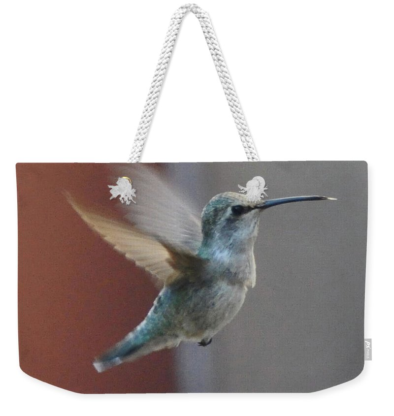 Animal Weekender Tote Bag featuring the photograph Young Anna's Hummingbird In Flight by Jay Milo