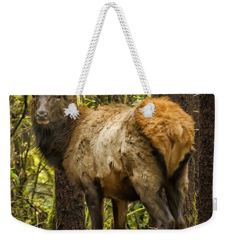 Elk Weekender Tote Bag featuring the photograph Young Bull Elk by Belinda Greb
