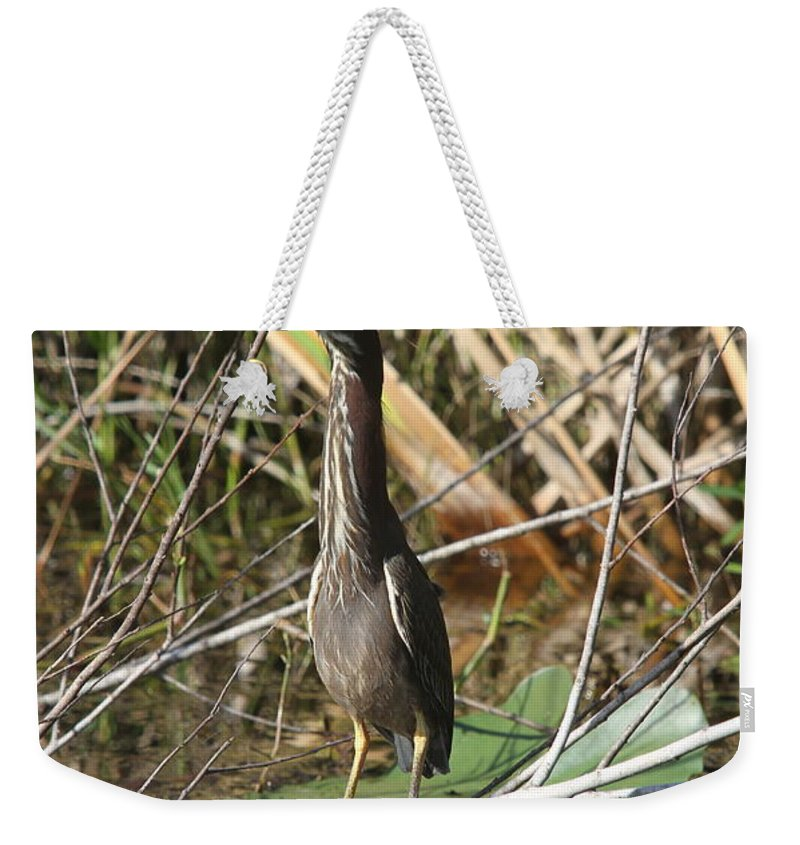 Green Heron Weekender Tote Bag featuring the photograph Young Green Heron by Christiane Schulze Art And Photography