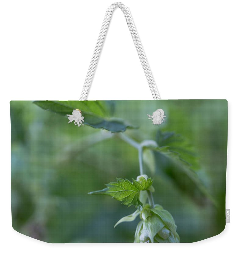 Hop Weekender Tote Bag featuring the photograph Young Hop by Kevin Buffington