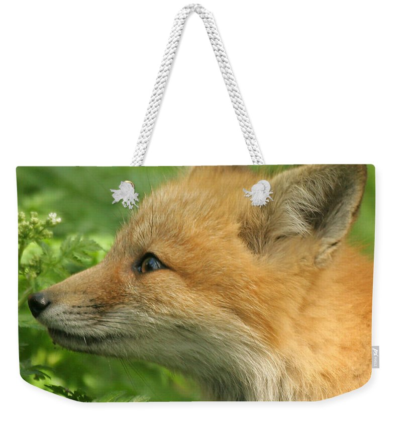 Red Fox Weekender Tote Bag featuring the photograph Young Red Fox In Profile by Doris Potter