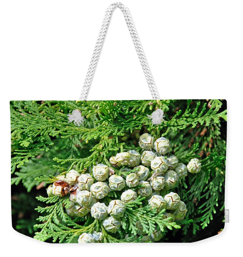 Stapenhill Weekender Tote Bag featuring the photograph Young Seed Cones Of Lawson Cypress by Rod Johnson