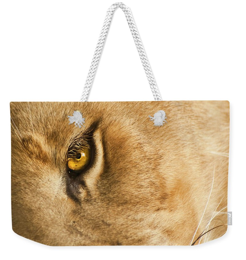 Lion Weekender Tote Bag featuring the photograph Your Lion Eye by Carolyn Marshall