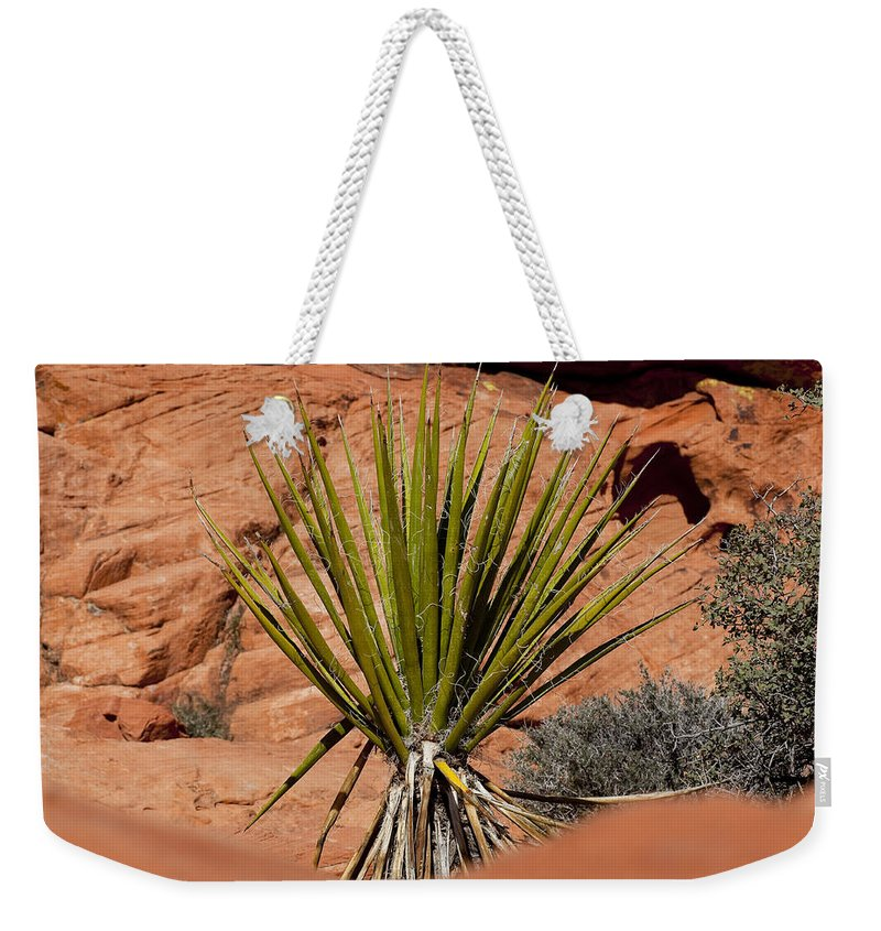 Yucca Plant Weekender Tote Bag featuring the photograph Yucca Beauty by Kelley King