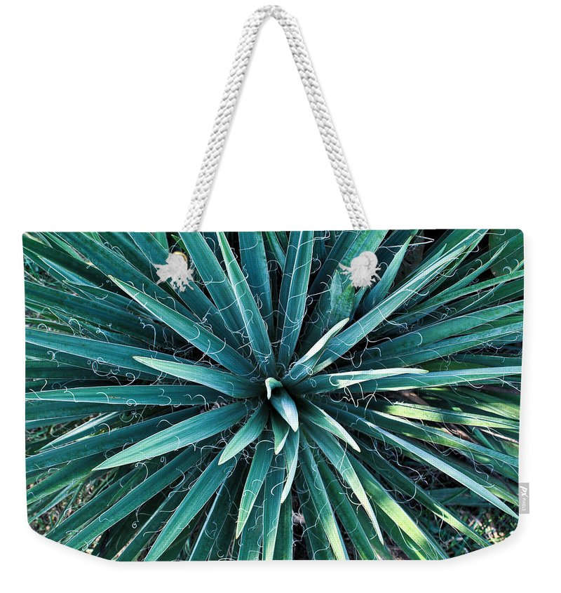 Yucca Weekender Tote Bag featuring the photograph Yucca Plant Detail by Douglas Barnett