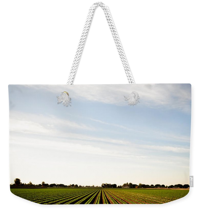 Lettuce Weekender Tote Bag featuring the photograph Yuma Fields by Scott Sawyer