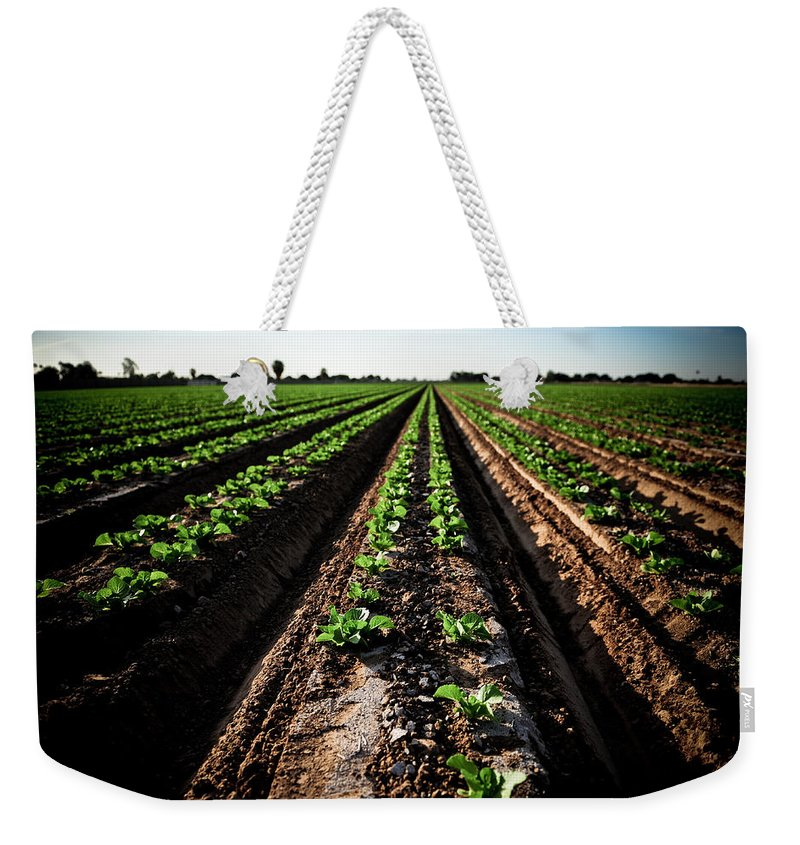 Lettuce Weekender Tote Bag featuring the photograph Yuma Lettuce by Scott Sawyer