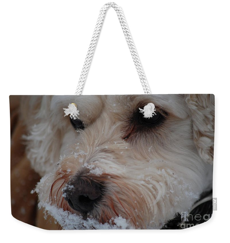 Dog Weekender Tote Bag featuring the photograph Yummy Snow by Lori Tambakis