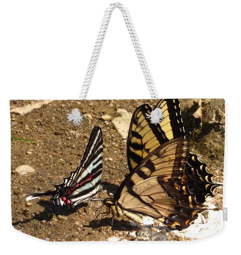 Long Tailed Zebra Butterfly Images Tiger Swallow Tail Butterfly Images Maryland Butterfly Prints Yellow Butterfly Images Entomology Forest Ecology Biodiversity Nature Rare Butterfly Prints Rare Butterfly Images Habitat Conservation Weekender Tote Bag featuring the photograph Zebra And Tigers by Joshua Bales
