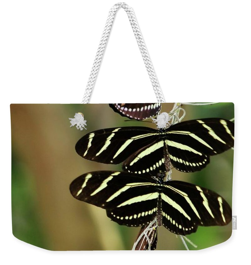 Zebra Weekender Tote Bag featuring the photograph Zebra Butterflies Hanging On by Sabrina L Ryan