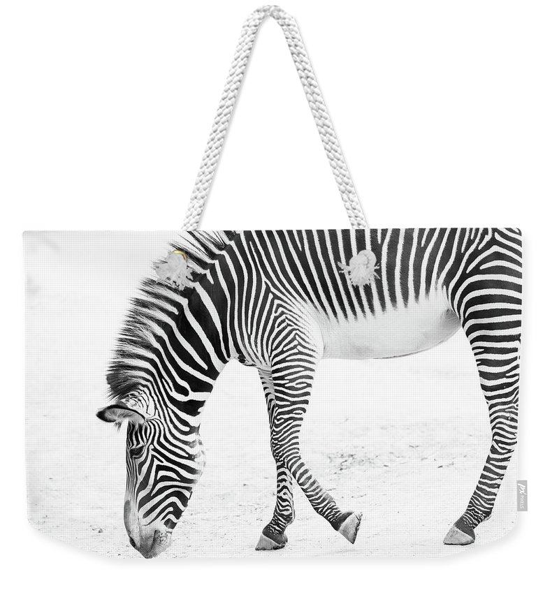 Weekender Tote Bag featuring the photograph Zebra by James Rosales