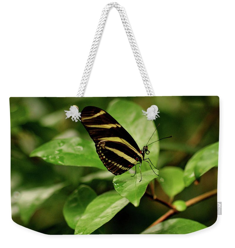 Butterfly Weekender Tote Bag featuring the photograph Zebra Longwing Butterfly by Sandy Keeton