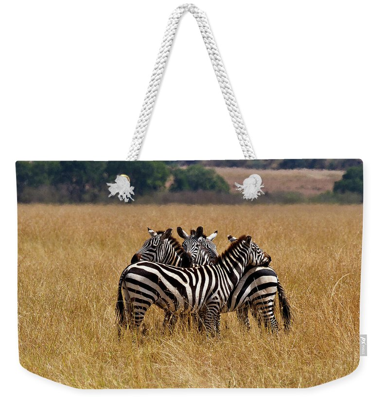 Zebra Weekender Tote Bag featuring the photograph Zebra Protect Each Other by Janet Chung