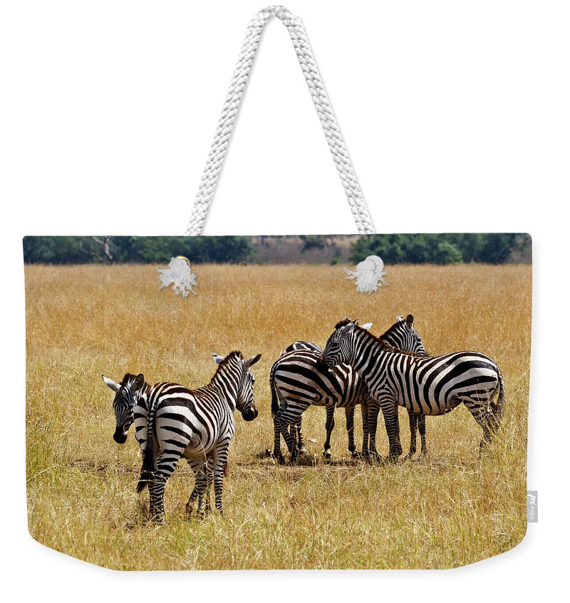 Zebra Weekender Tote Bag featuring the photograph Zebra Togethering by Janet Chung