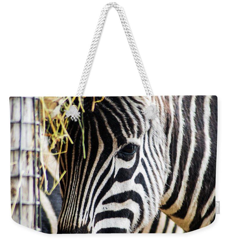 Zebra Weekender Tote Bag featuring the mixed media Zebra Zee by Amitabh Dayal