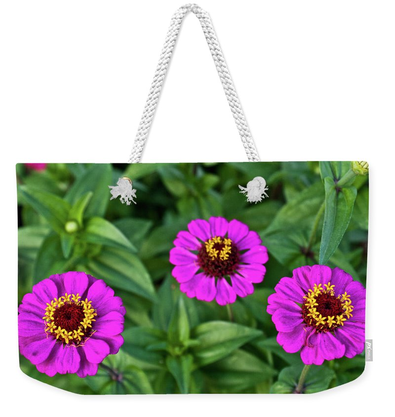 Zennia Weekender Tote Bag featuring the photograph Zennia Triplet by Douglas Barnett