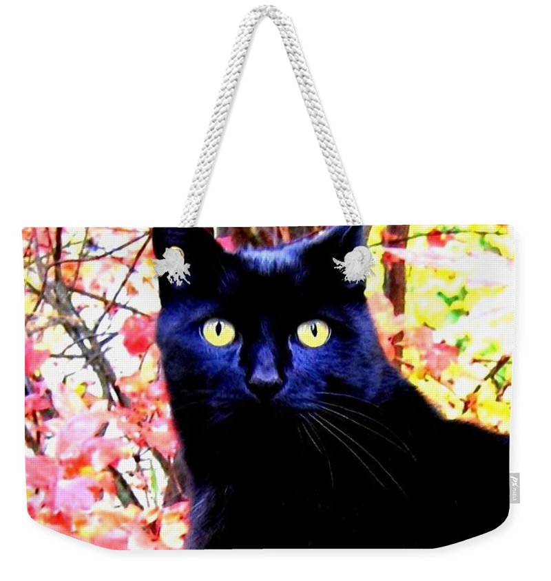 Ziggy Weekender Tote Bag featuring the photograph Ziggy by Will Borden