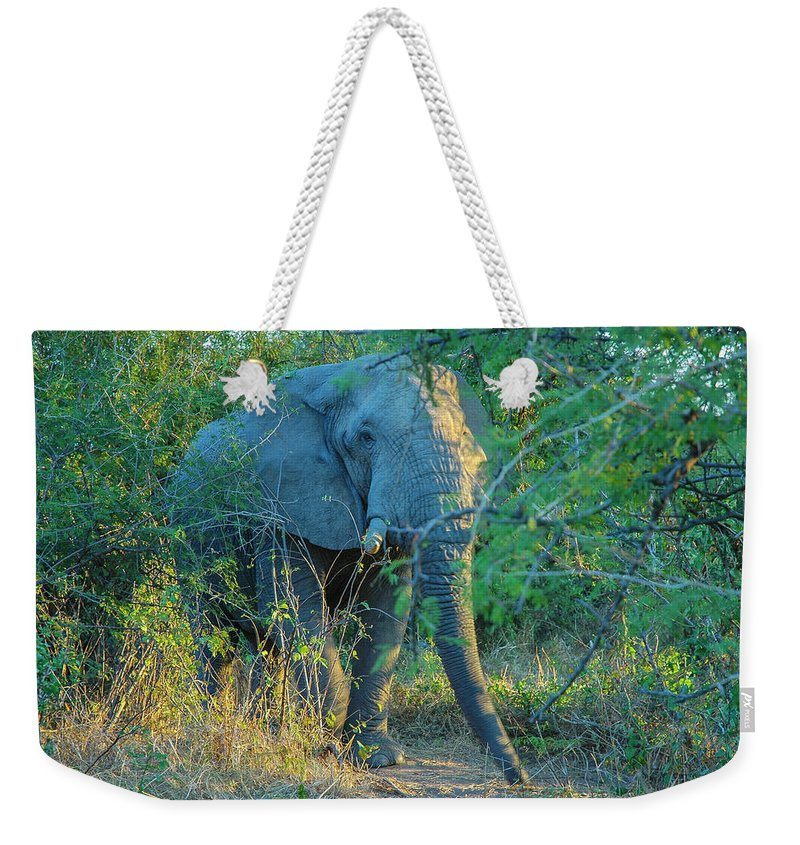 Elephant Weekender Tote Bag featuring the photograph Zimbabwe Bull Elephant by David Drew