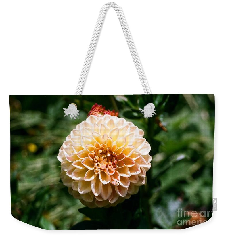 Zinnia Weekender Tote Bag featuring the photograph Zinnia by Dean Triolo