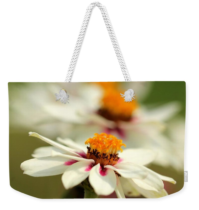 Mccombie Weekender Tote Bag featuring the photograph Zinnia Named Zahara Starlight Rose by J McCombie