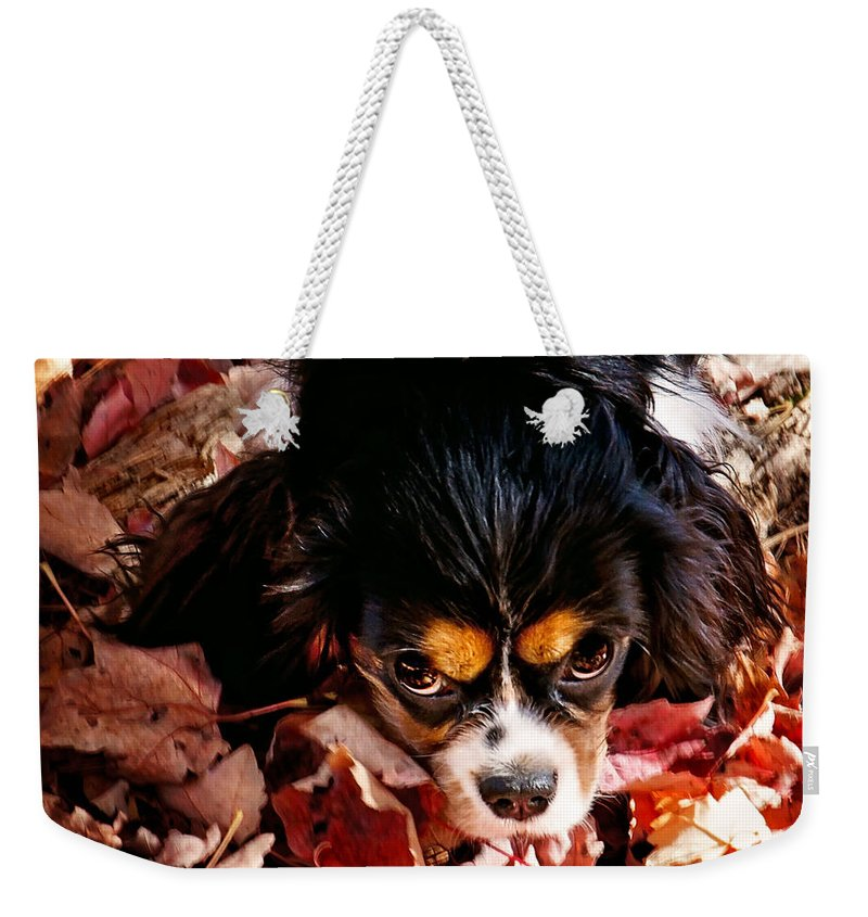 Tri Colored Cavalier King Chalres Spaniel Weekender Tote Bag featuring the photograph Zoeh - Look Into My Eyes by Gwen Gibson