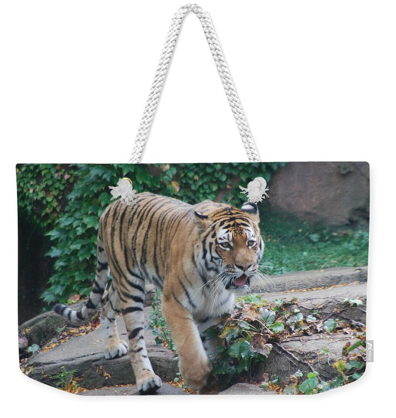 Weekender Tote Bag featuring the photograph Chicago Zoo Tiger by Jose Canales