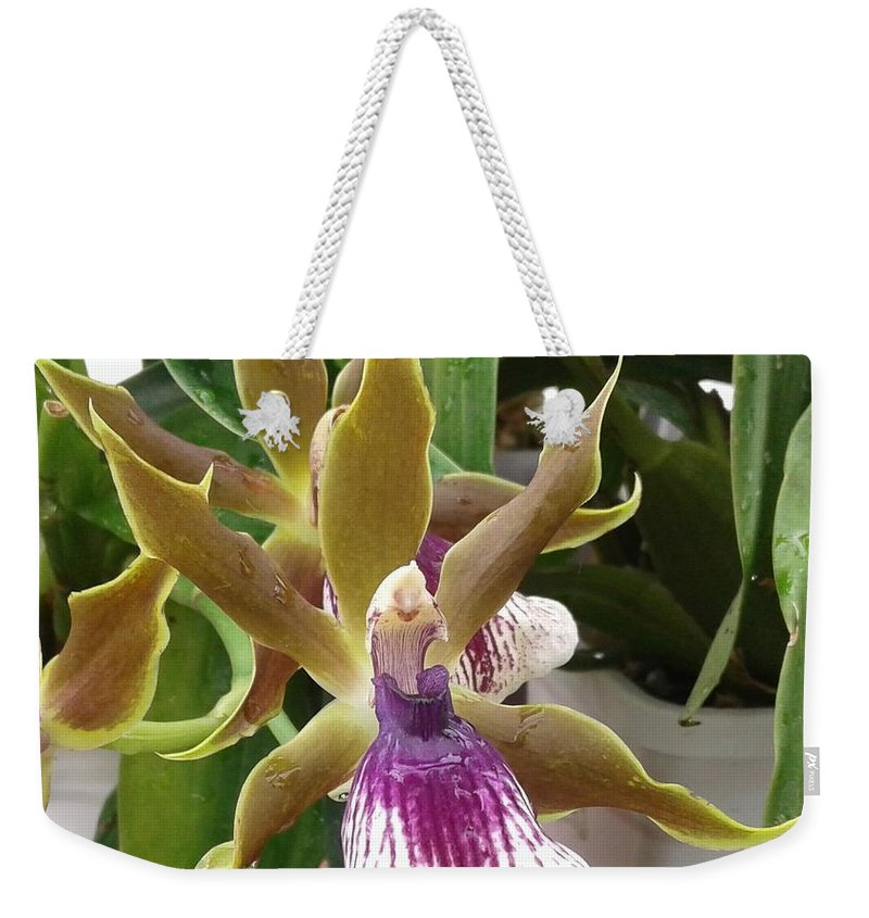 Orchidacea Weekender Tote Bag featuring the photograph Zygopetalum Rhein Moonlight by Janice Dunlap