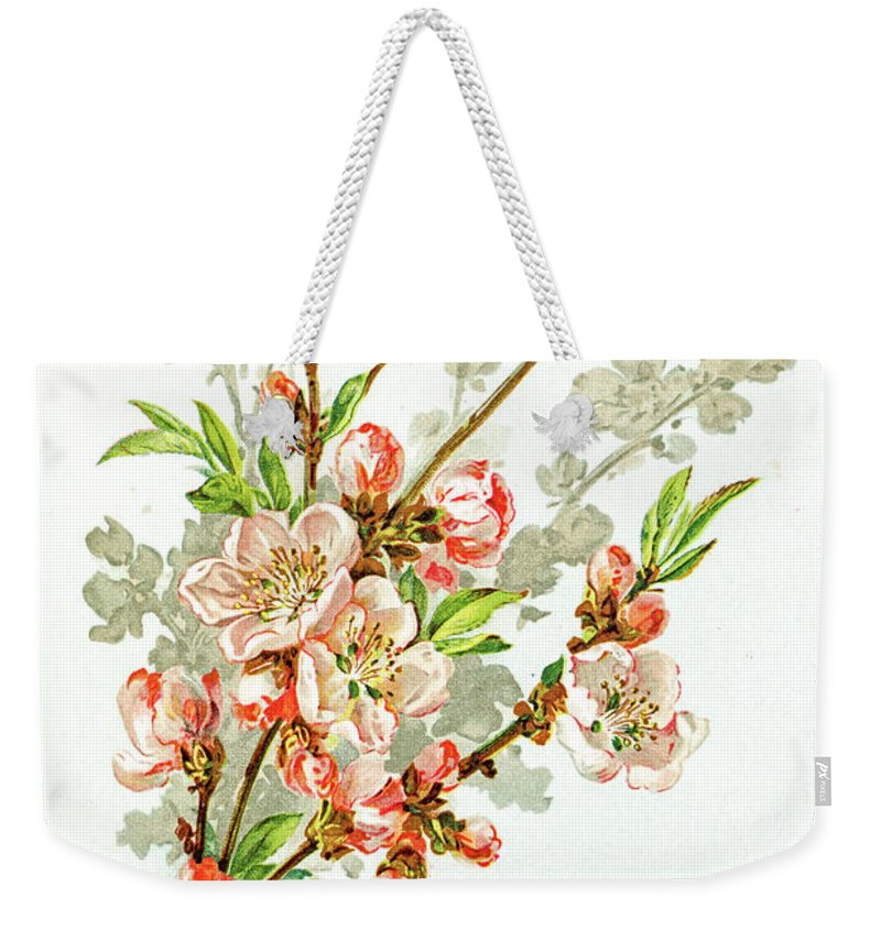 Cherry Weekender Tote Bag featuring the digital art Apple Blossom 19 Century Illustration by Mashuk