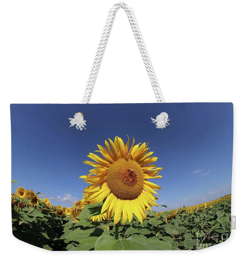 Sunflower Weekender Tote Bag featuring the photograph Bee On Blooming Sunflower by Michal Boubin