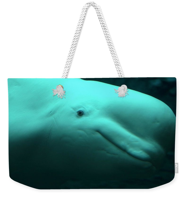 One Animal Weekender Tote Bag featuring the photograph Beluga Whale by Lingbeek