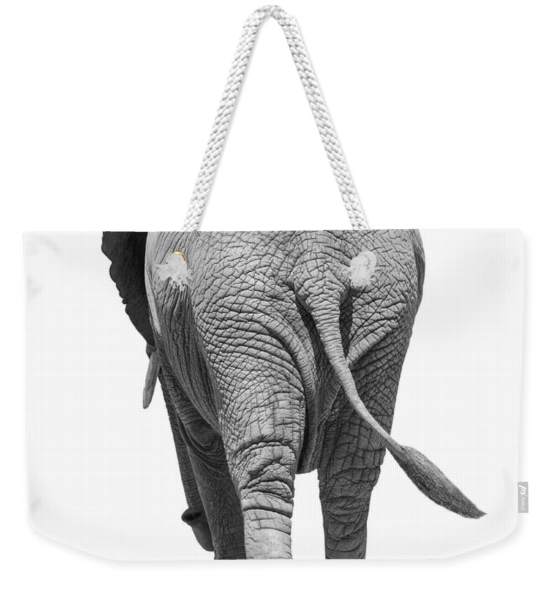 Shadow Weekender Tote Bag featuring the photograph Elephants Behind by Burazin