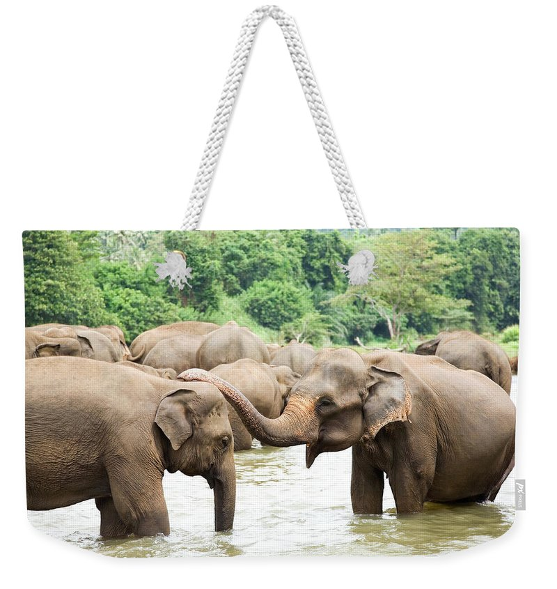 Animals In The Wild Weekender Tote Bag featuring the photograph Elephants In River by Lp7