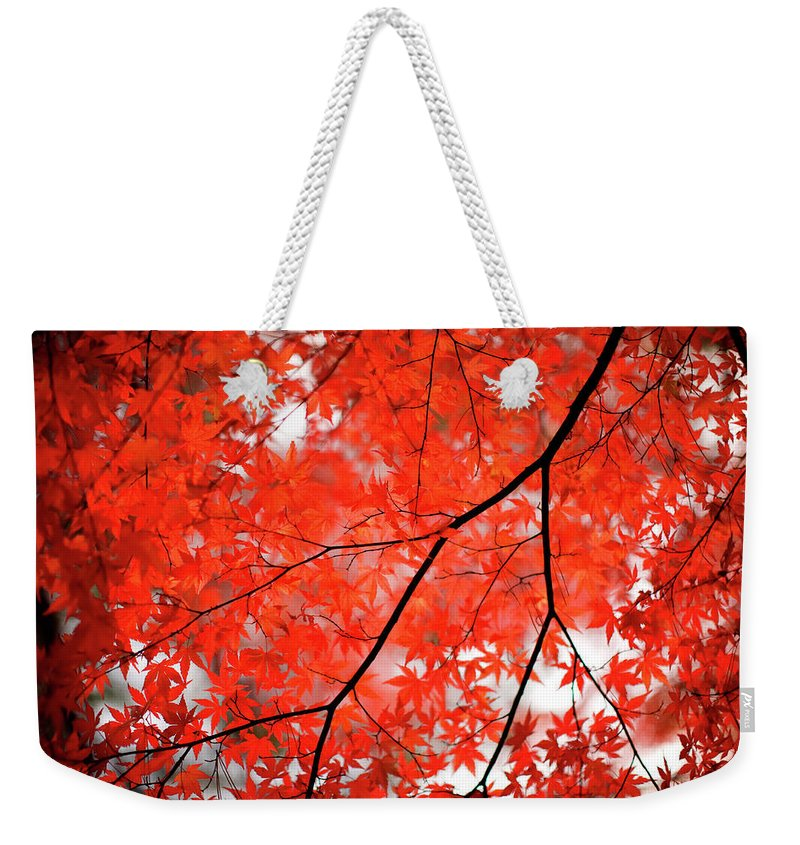 Tranquility Weekender Tote Bag featuring the photograph Fall Colors In Japan by Jdphotography