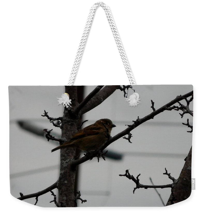 Nature Weekender Tote Bag featuring the photograph Feathered Friend by Barb Montanye Meseroll