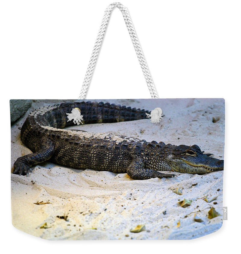 Florida Weekender Tote Bag featuring the photograph Gator in Sand by Anthony Jones