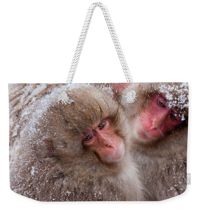 Vertebrate Weekender Tote Bag featuring the photograph Japanese Macaques, Japanese Alps by Mint Images/ Art Wolfe