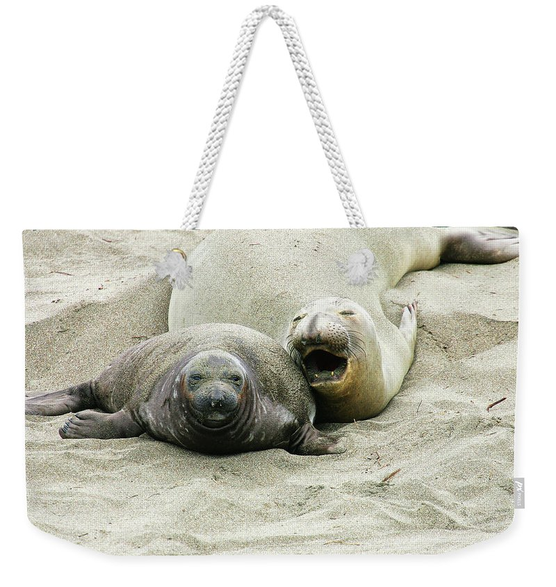 Elephant Seals Weekender Tote Bag featuring the photograph Mom And Pup by Anthony Jones