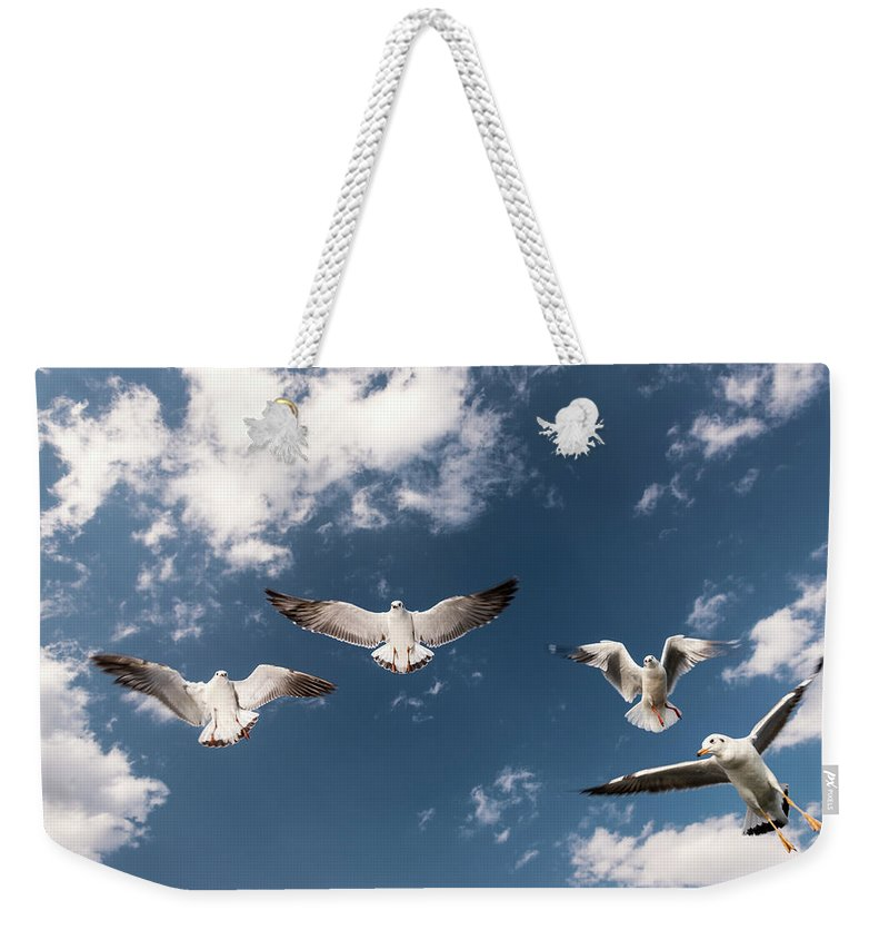 Animal Themes Weekender Tote Bag featuring the photograph Myanmar, Inle Lake, Seagulls Inflight by Martin Puddy