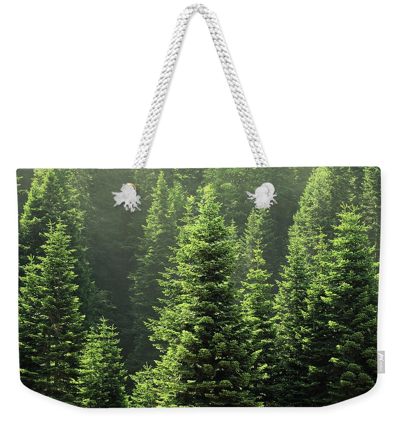 Scenics Weekender Tote Bag featuring the photograph Pine Tree by Petekarici