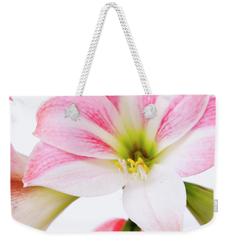Flower Weekender Tote Bag featuring the photograph Pink Amaryllis by Maria Jeffs