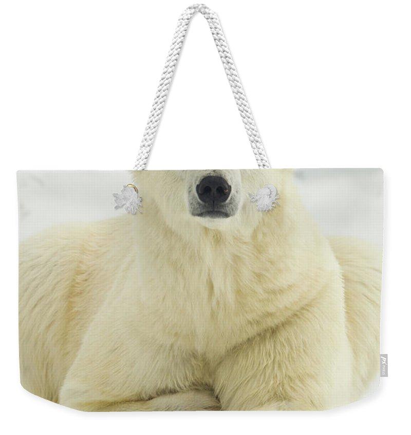 Dawn Weekender Tote Bag featuring the photograph Polar Bear, Svalbard, Norway by Paul Souders