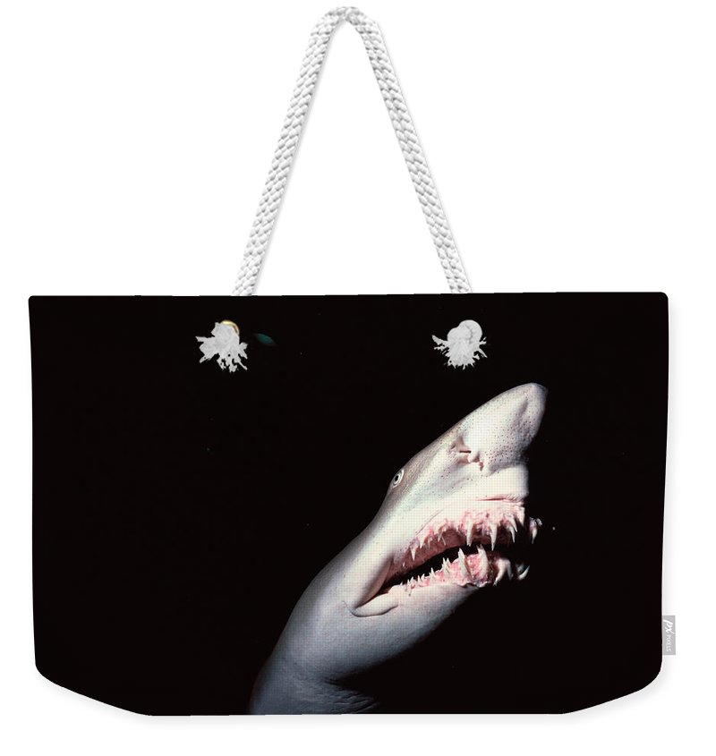 Underwater Weekender Tote Bag featuring the photograph Sand Tiger Shark by Jeff Rotman