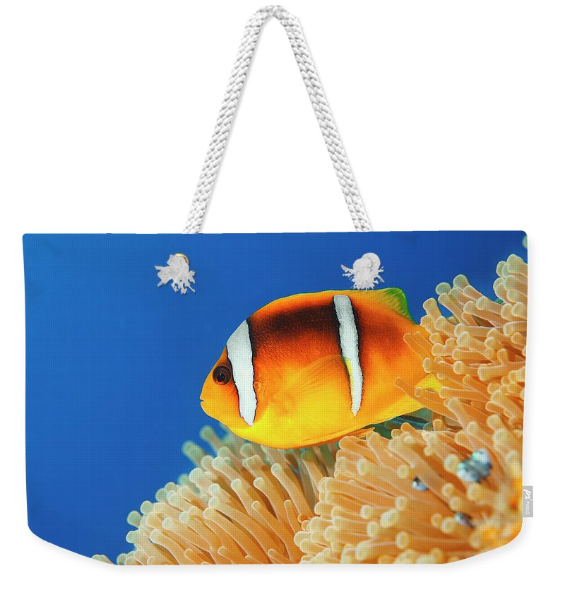 Underwater Weekender Tote Bag featuring the photograph Sea Life - Anemone Clownfish by Ultramarinfoto